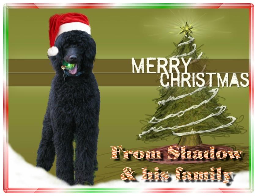 Name:  shadow-christmas-card-3.jpg Views: 1821 Size:  291.5 KB