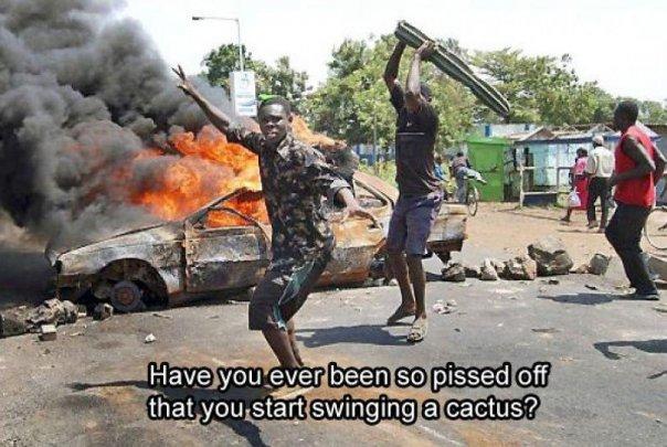 Name:  cactus.jpg Views: 27859 Size:  69.0 KB